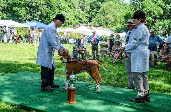 VA Foxhound Show-10