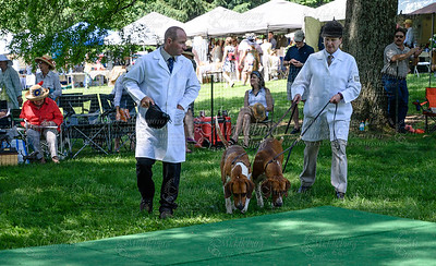 VA Foxhound Show-5