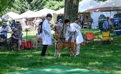 VA Foxhound Show-4