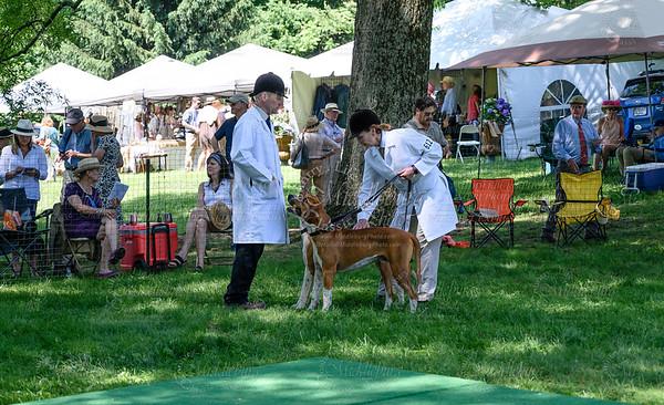 VA Foxhound Show-3
