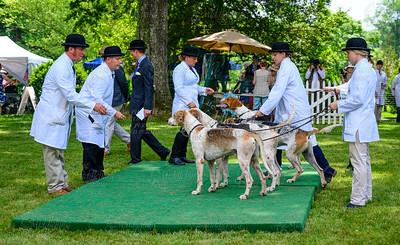 VA Foxhound Show-62