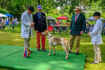 VA Foxhound Show-81