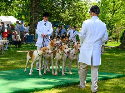 VA Foxhound Show-44