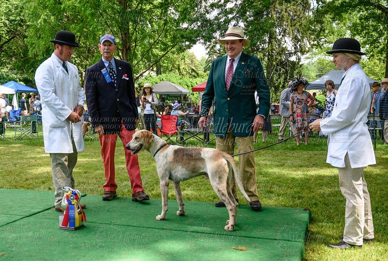 VA Foxhound Show-76