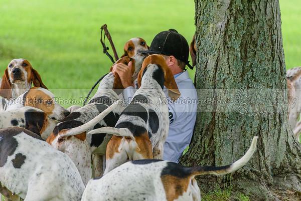 hound show-781