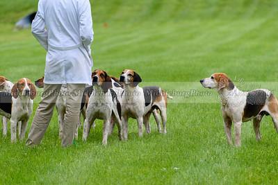hound show-251