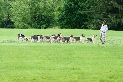 hound show-583