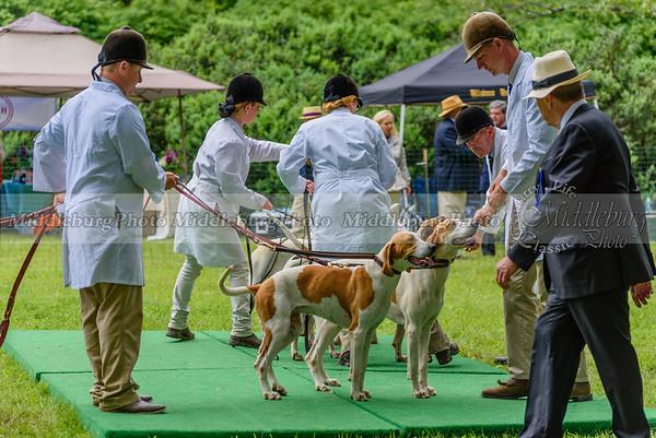 hound show-1