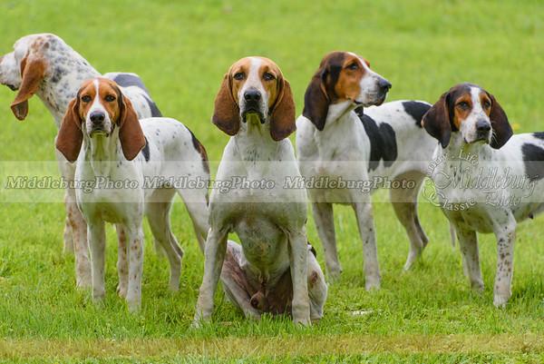hound show-36