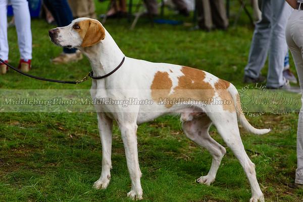 hound show-99