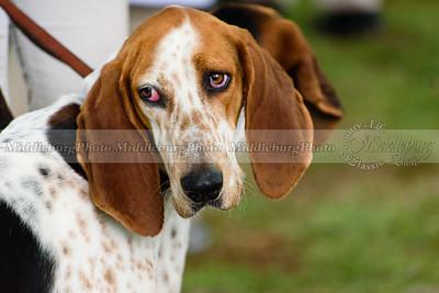 hound show-145