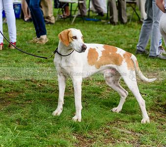 hound show-48