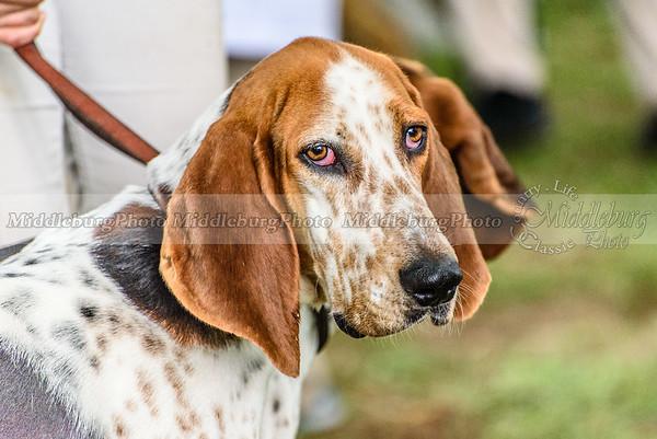 hound show-351
