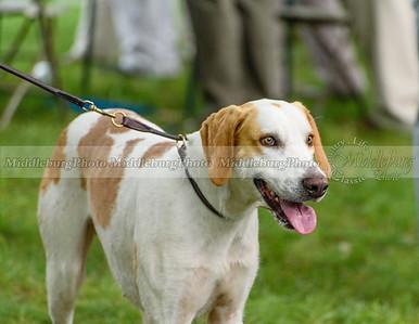 hound show-363