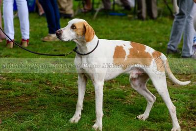 hound show-469
