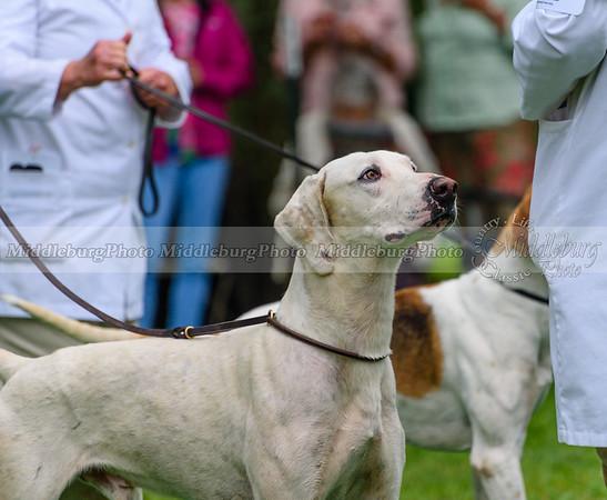 hound show-675