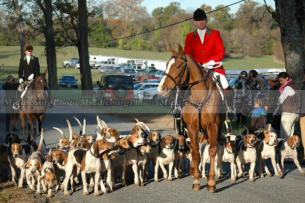 Hounds crossing road Groveton #12