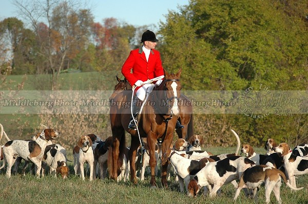 horse and hounds Groveton #10