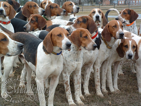 Fox Hounds Foxcroft 2005