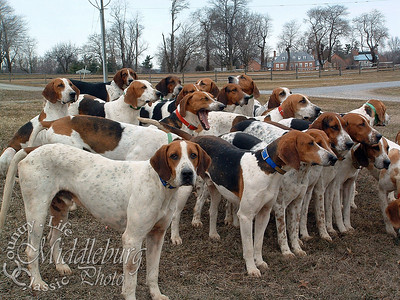 Fox Hounds 2005 Foxcroft