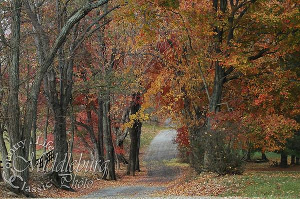 Fall Color Foxstone #63