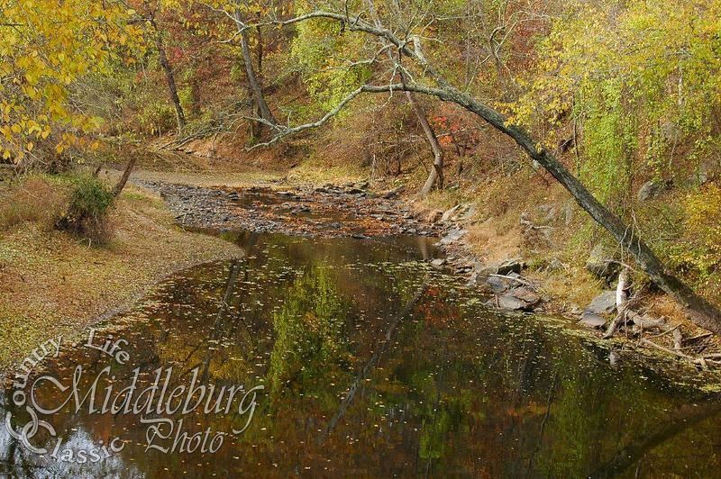 Goose Creek Foxstone #64
