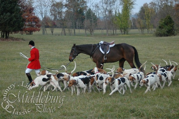 Horse and Hounds Foxstone #46