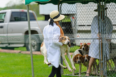 MH Puppy Show-38