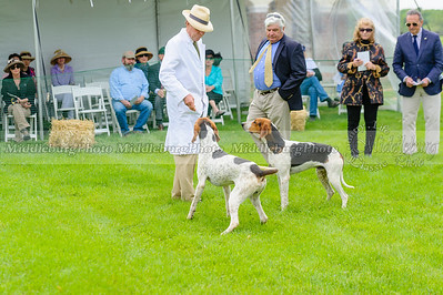 MH Puppy Show-40