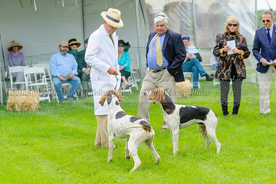 MH Puppy Show-41
