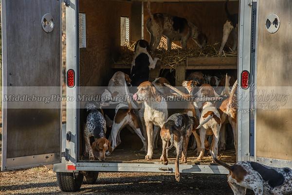 Mr  Stewart's Cheshire Foxhounds-29