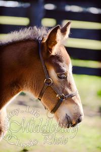 nick foal-5162