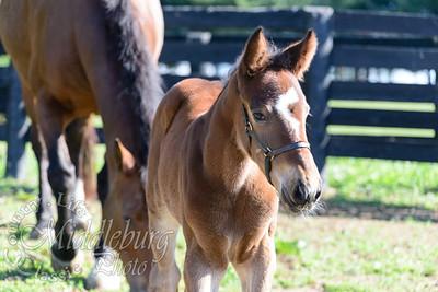 nick foal-5161