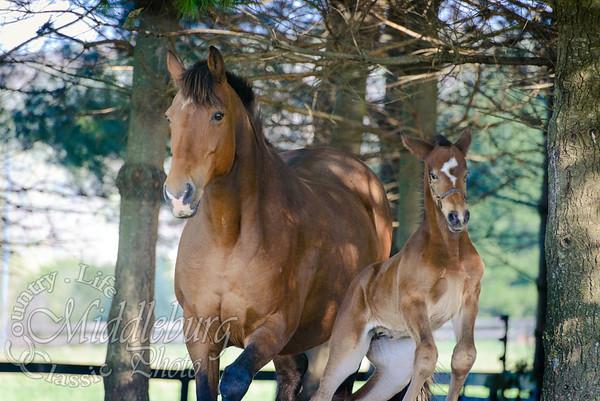 nick foal-5142