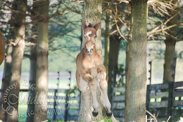 nick foal-5143