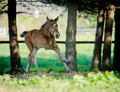 nick foal-5151