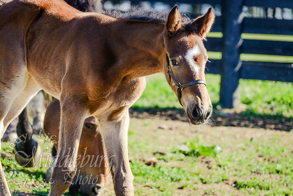 nick foal-5159