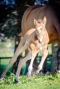 nick foal-5149