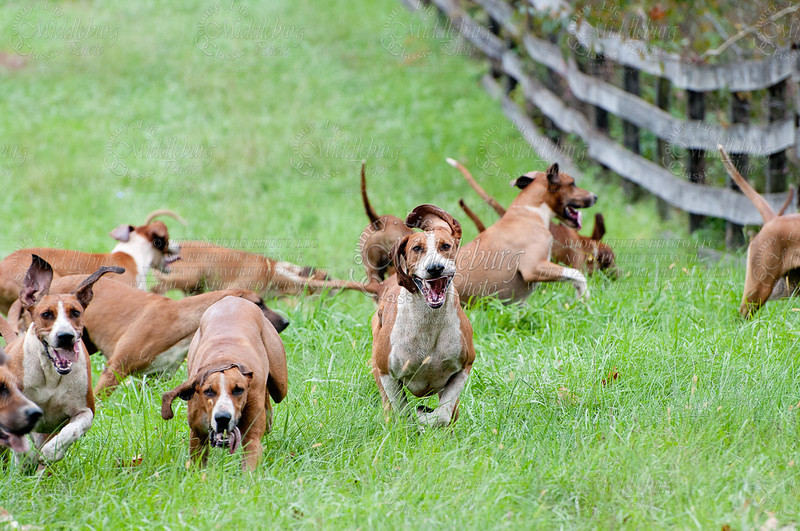 OCH--Sweet Bay Farm 10-23-2011