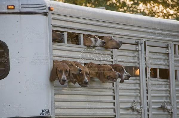 Orange County Hounds