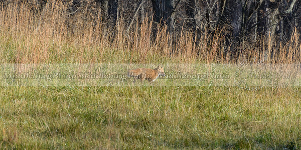 fox view-0823