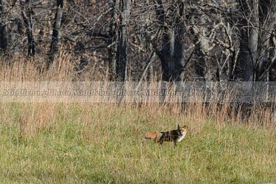 fox view-0827