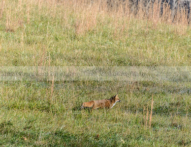 fox view-0817