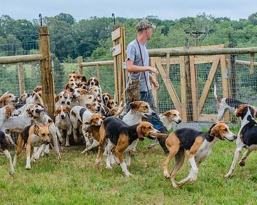pfh hounds-63