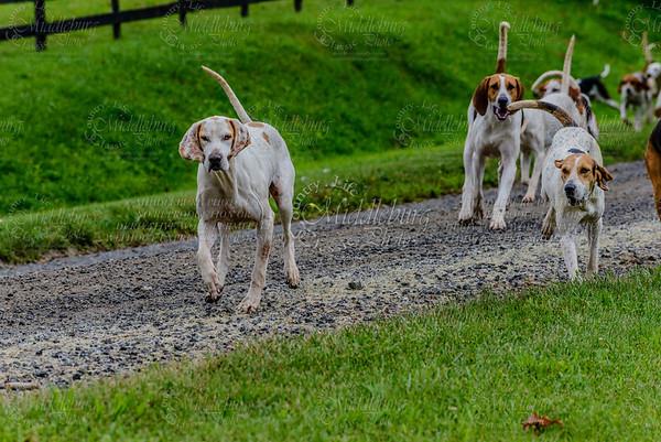 pfh hounds-89