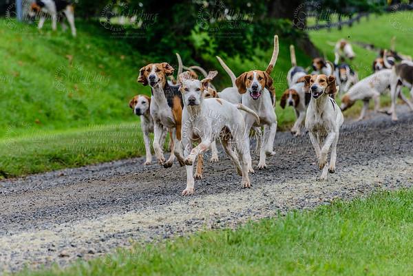 pfh hounds-88