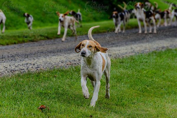 pfh hounds-92