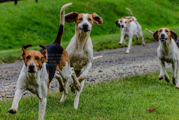 pfh hounds-91