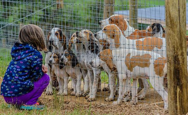 pfh hounds-59