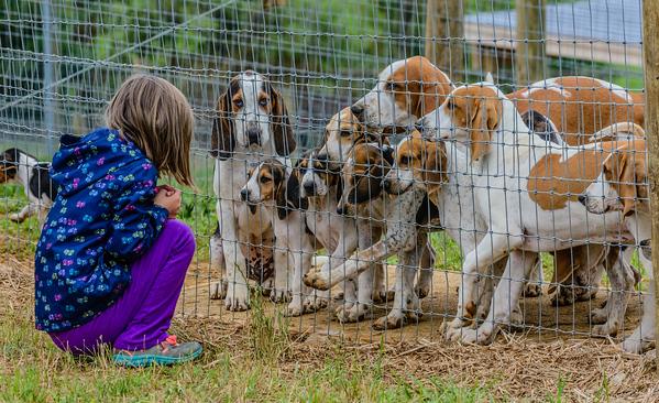 pfh hounds-58